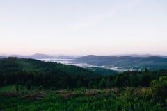 风景 山和很多绿叶野花 空间在天空中 库存照片