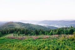 风景 山和很多绿叶野花 空间 图库摄影
