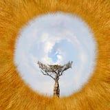 风景360度视图与树的在非洲 库存照片