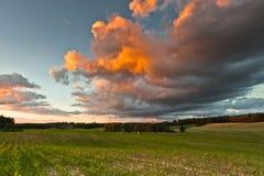 风景-玉米和多云风雨如磐的天空的领域 免版税库存图片