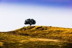 风景 免版税图库摄影