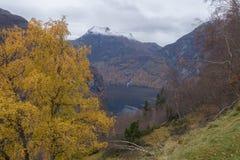 风景Geiranger海湾在秋天,挪威 图库摄影