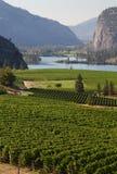 风景Okanagan的葡萄园,不列颠哥伦比亚省 免版税库存照片