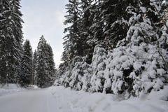 风景RIDANNA -意大利南蒂罗尔 库存图片