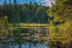 风景Summer湖 库存图片
