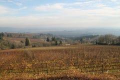 风景Willamette秋天的谷葡萄园 库存照片