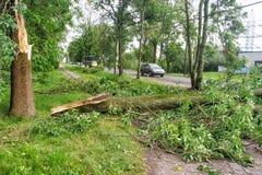 风暴打破的树在路说谎 免版税库存图片
