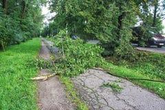 风暴打破的树在路说谎 库存图片
