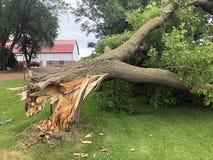 风暴损伤被击倒的树 库存照片