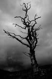 风暴结构树 免版税库存照片