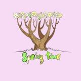 风格化传染媒介春天树 免版税库存照片