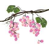 风格化多角形分支玫瑰色葡萄 库存例证