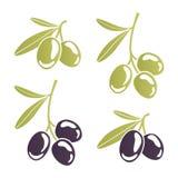 风格化橄榄树枝 库存例证