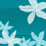 风格化空白Lillies 免版税库存图片