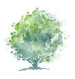 风格化结构树水彩 免版税库存图片