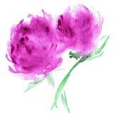 风格化阿斯特拉花的水彩例证 花的彩色插图在水彩绘画的 免版税图库摄影