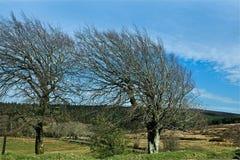 风清扫了树 图库摄影