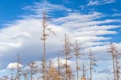 风灾难的影响的森林 免版税库存照片