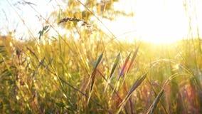 风的草原在日落 影视素材