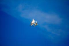 风筝 库存照片