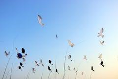 风筝 库存图片