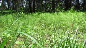 风草夏天种植自然 影视素材