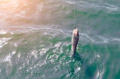 风行勾子鱼被拉出水 库存图片
