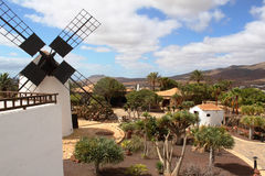 风车和加那利群岛,西班牙的美丽的景色 免版税库存照片