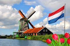 风车和房子在Zaanse Schans,荷兰 库存照片