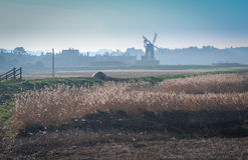 风车和芦苇在北部诺福克,英国 免版税库存图片