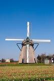 风车和tulipfield 库存图片