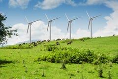 风车在夏天环境美化与吃草的母牛 免版税库存照片