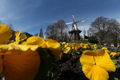 风车在Wallanlagen公园,布里曼 库存图片