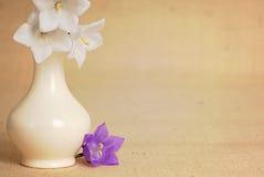 风铃草粗麻布紫色花瓶白色 库存照片