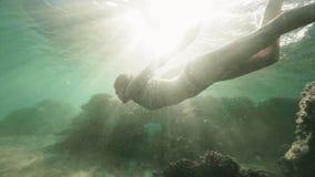 风镜的愉快的妇女潜航在阳光背景的蓝色海的水下的游泳的 年轻女人游泳 影视素材