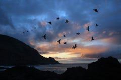 风雨如磐大西洋黄雀色的岸 免版税库存照片