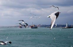 风雨如磐海运的海鸥 库存图片