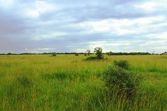 风雨如磐的乌干达大草原 免版税库存图片