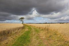 风雨如磐的农田风景 免版税库存照片