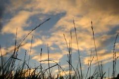风雨如磐的天空在夏天 免版税库存照片