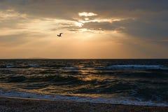 风雨如磐的海天气和孤独的海鸥在日落天空温暖的光前面充分盘旋 免版税库存图片