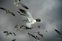 风雨如磐的飞行 库存图片