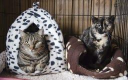 风雨棚猫 库存图片