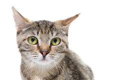 从风雨棚的猫要求关心、帮助、食物和保护 库存图片