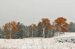 暴风雪在黄石公园 库存照片