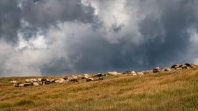 风暴接近绵羊牧场地 库存照片