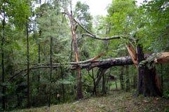 飓风卡特里娜后果  免版税库存图片