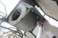 飓风损伤 图库摄影