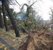 飓风被连根拔的结构树包围的桑迪房子 免版税库存图片