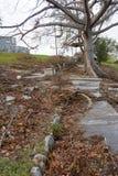 飓风马修损伤在拿骚,巴哈马 库存照片